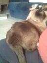 Sedona on my lap